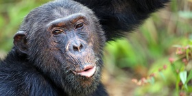 Gombe Chimpanzee Excursions