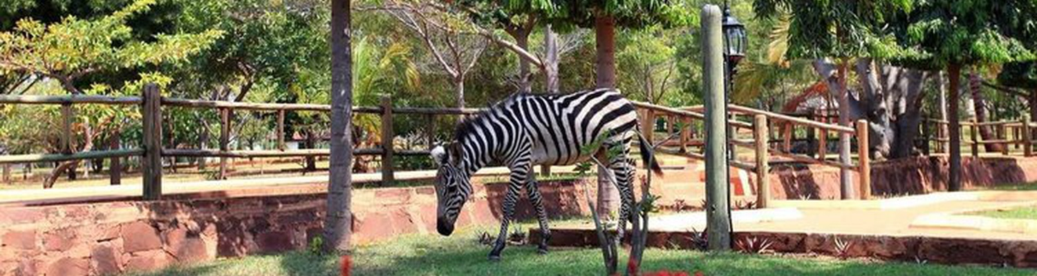 Kigoma Hilltop Hotel Zebra. Book a stay on Special Offers